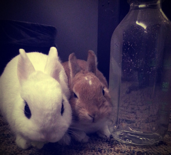 Cute bunnies: Pavlova and Toast