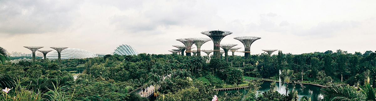 super tree grove // gardens by the bay, singapore
